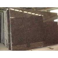 大量出售福建优质的英国棕 英国棕批发