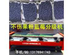 龙口伟明牌蓝莓选果机物优价廉